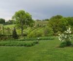 Arboretum Wojsławice - Otwarcie Polskiego Ogrodu Milenijnego, maj 2019 (fot. M.Kubus)