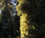 arborewrogowie-x2012-08