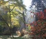 arborewrogowie-x2012-09