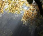 arborewrogowie-x2012-12