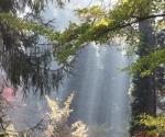 arborewrogowie-x2012-31