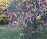 Jesienne kolory - wycieczka po Arboretum w Rogowie, 20 X 2012 (fot. - M. Pstrągowska)