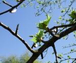 drzewapdanglii-iv-2015-06