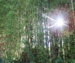 drzewapdanglii-iv-2015-15