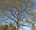 drzewapdanglii-iv-2015-52