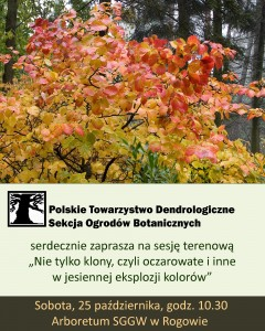 jesien w Rogowie