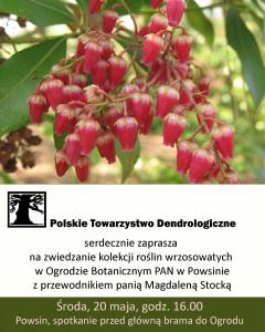 wrzosowate-w-Powsinie