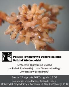Mykoryza w życiu drzew - plakat