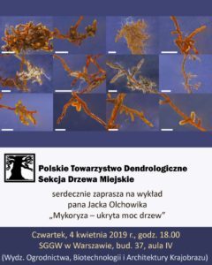 """Plakat - """"Mykoryza – ukryta moc drzew"""""""