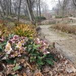 Arboretum Wojsławice - fot. Hanna Grzeszczak-Nowak